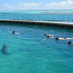exercice de dressage sous l'eau