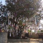 Tree of wishes Pathos