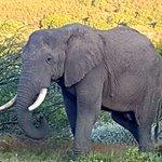 Gondwana Game Reserve Photo