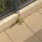 Plant growing on our balcony. How does a cleaner miss this in the time it has taken to grow