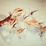 Photo de Musee d'histoire naturelle de La Rochelle