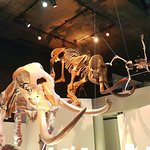 The Houston Museum of Natural Science Foto