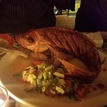 Dampa(Red snapper)