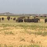 one of the elephant herds