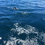 Seals round up bait fish ball