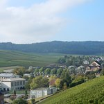 Vertical vineyards! The area is famous for its white wines ...