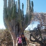 An incredible old cactus where woodpeckers live.