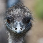 Foto di Cotswold Wildlife Park and Gardens
