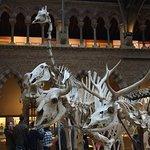 University Museum of Natural History Foto