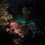 Illuminated park near hotel