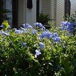 Garden District Foto