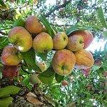 Hartland Family Orchard