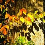 Blacklick Woods Metro Park