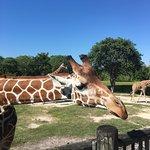 Beautiful day to visit zoo Miami