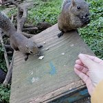 Machida Squirrel Garden