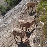 湖畔の斜面にも大量の動物発見