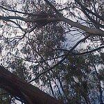 Flinders-Chase-Nationalpark Foto