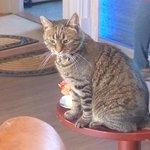 Housecat2