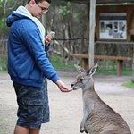 Feed the kangaroo