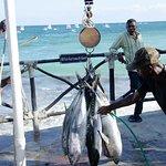 200lbs of tuna caught, great sushi!