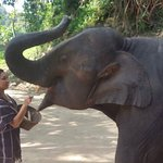 Patara Elephant Farm - Private Tours Foto