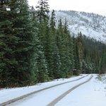 Flathead National Forest Foto