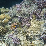 Brayka Bay Reef Resort Foto