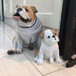 Two of the hotels mascots