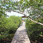 Path from dock to grounds