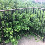 Out of control weeds and greenery