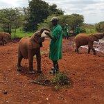 Photo of David Sheldrick Wildlife Trust