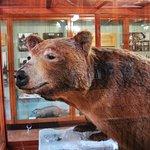 Photo of Banff Park Museum