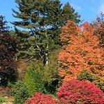 Fall Colors in Acadia N.P.