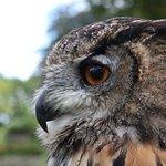Eagle owl on display