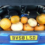 Lots of pumpkins again...