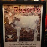 Roberto, official mascot of Harry's