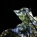 Yahoo Falls - Big South Fork NRRA