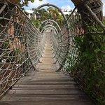 Rope Bridge over Shark pools.
