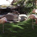 Foto de Flamingo Wildlife Habitat