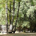 cabanes dans les arbres, tyrolienens