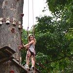 עץ טיפוס, 20 מטר