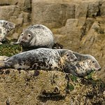 Seals bask in the summer sun