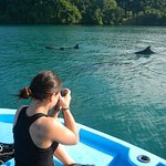 Dophins frequent our cove, and make up part of the beautiful daily sea experience.