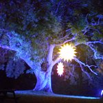 stars on trees