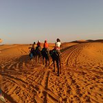 on the back of the camel