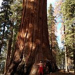 Hugging a sequoia. WOW!