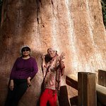 At the base of one of the smaller sequoias... velvety soft!