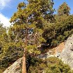 Trees growing in minute cracks in the rocks.