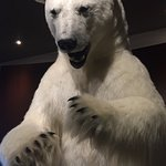 Taxidermy polar bear in the lobby. Quite frightening actually!