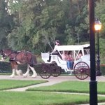 Carriage ride along river